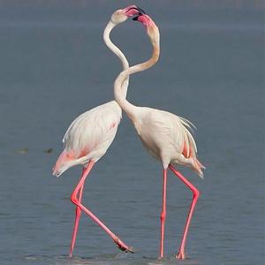 flamingoNew